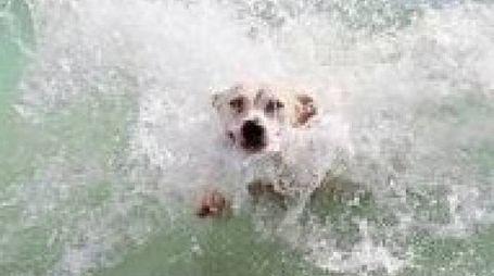 Un cane felice in mare
