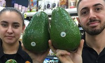 L'avocado gigante pesa in media 1,2 kg