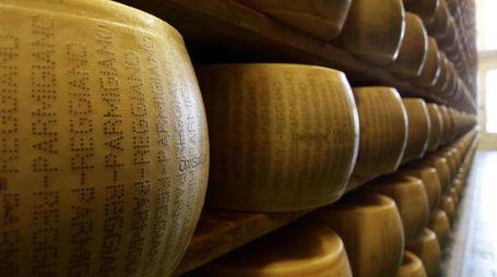 Il Parmigiano rischia un'etichettatura dannosa