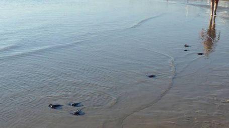 Il parto avvenuto a pochi metri dalla riva