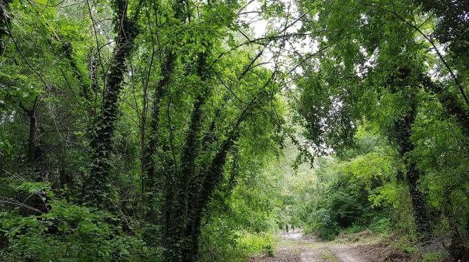 Bosco ai Prati di Caprara  © FAI - Fondo Ambiente Italiano