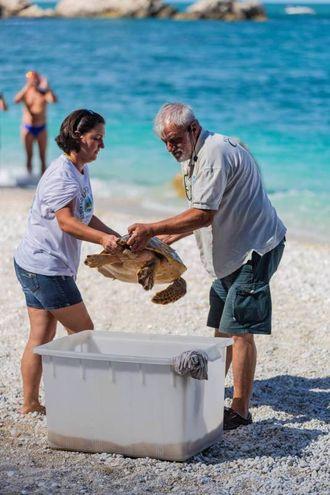Rodolfa, una tartaruga di dieci anni lunga 41 centimetri è stata salvata lo scorso marzo in condizioni di ipotermia. Qui mentre viene rilasciata nel suo habitat naturale
