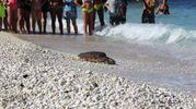 La spiaggia delle Due Sorelle dove il cetaceo viene rilasciato nel suo habitat naturale