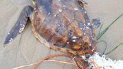 Solo dal 2002 sono state curate e restituite al mare oltre 300 tartarughe marine, con un incremento notevole negli ultimi 8 anni