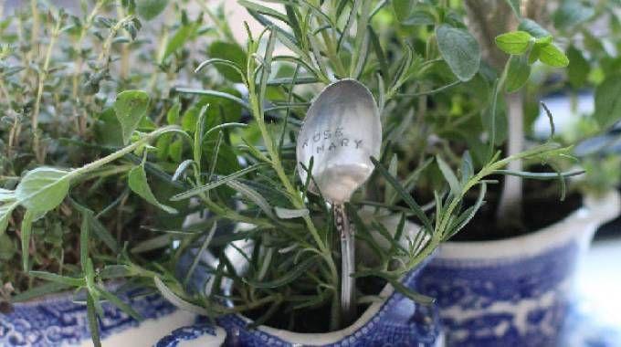 mini giardino di erbe aromatiche