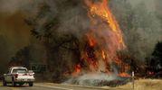 Incendi in California (Ansa)
