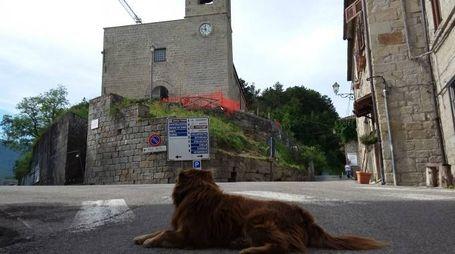 Il cane signore di Montegallo
