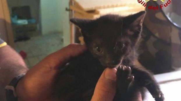Il gattino liberato