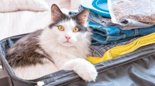 Un micio in valigia