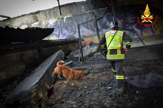 Le ricerche dei vigili del fuoco con i cani