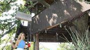 Incastonata perfettamente in una quercia secolare, alta una quindicina di metri, la casa sull'albero si trova ad Abbadia di Naro nel Comune di Acqualagna (foto Solidea Vitali Rosati)