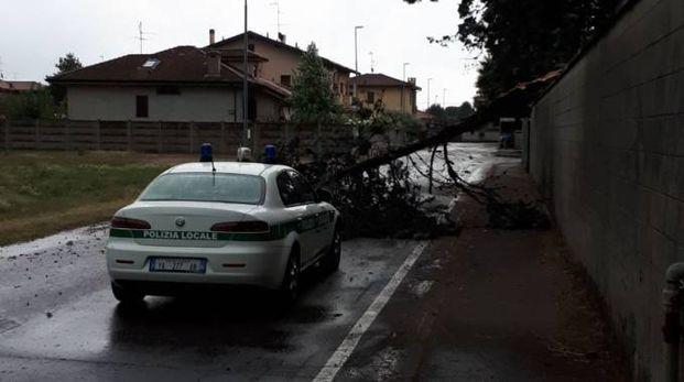 L'albero caduto a San Lorenzo