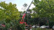 Gli alberi caduti a Marina Romea