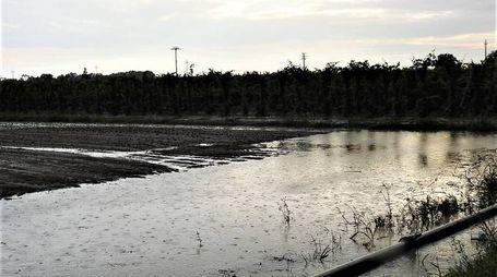 Terreni allagati in via Traversagno (Scardovi)