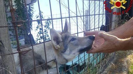 Cane incastrato salvato dai vigli del fuoco
