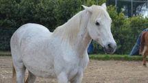 Allergia: Corallo, uno dei due cavalli