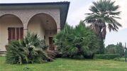 Una palma sradicata dalla furia del vento (Scardovi)
