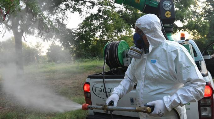 """Il virus chiamato """"Febbre del Nilo"""" è causato dalla puntura della zanzara Culex"""