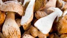 2) Fungolandia - Sagra del fungo in Valle Brembana