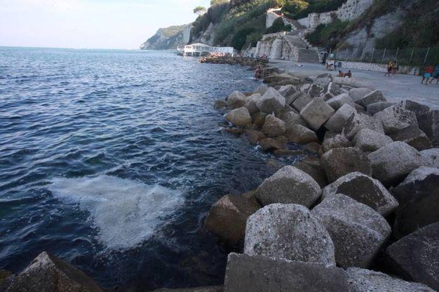L'alga è portata dalla corente molto vicino alla riva (Foto Antic)