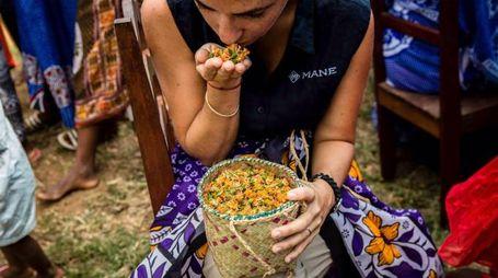 Vaniglia in Madagascar (QN)