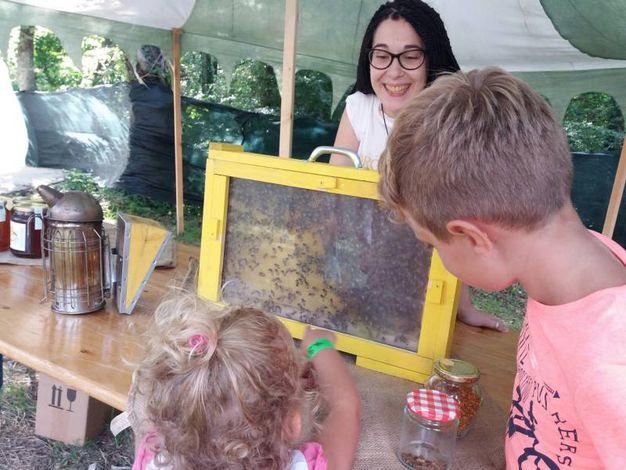 Mostra delle api