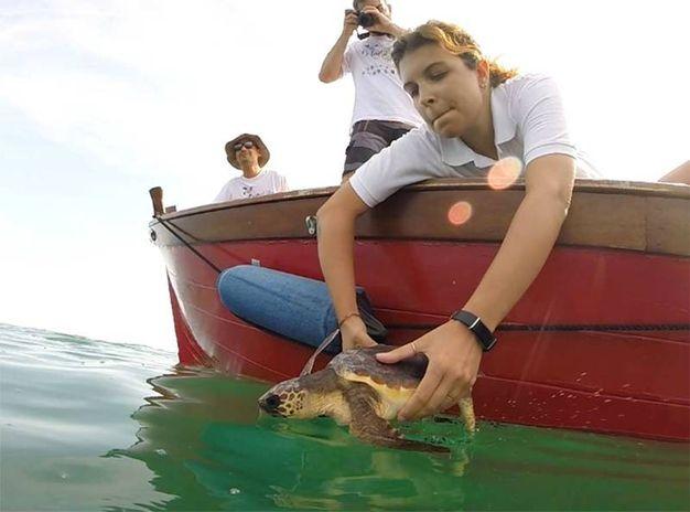Tom liberata in mare questa mattina, a tre miglia dalla costa, in corrispondenza della spiaggia di Animalido.