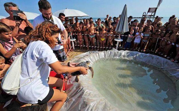 Tom fa parte delle 24 tartarughe che a marzo di quest'anno erano state recuperate  lungo la costa adriatica con sintomi di ipotermia