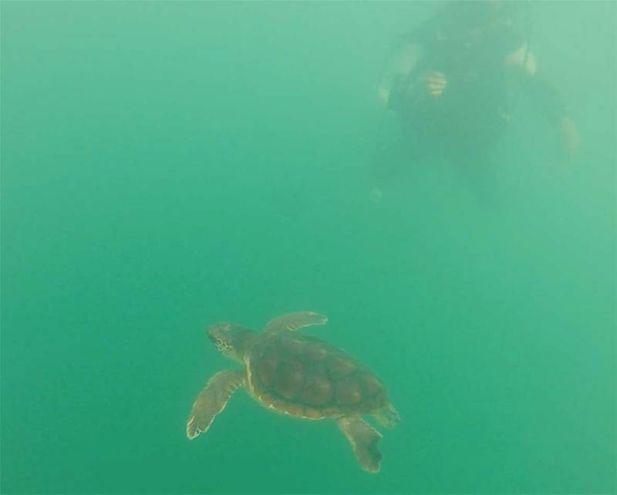 La tartaruga è stata chiamata Tom anche se si saprà se è un maschio o una femmina solo tra 25-30 anni, quando avrà raggiunto la maturità sessuale
