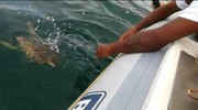 La caretta-caretta è stata liberata oltre due miglia dalla costa