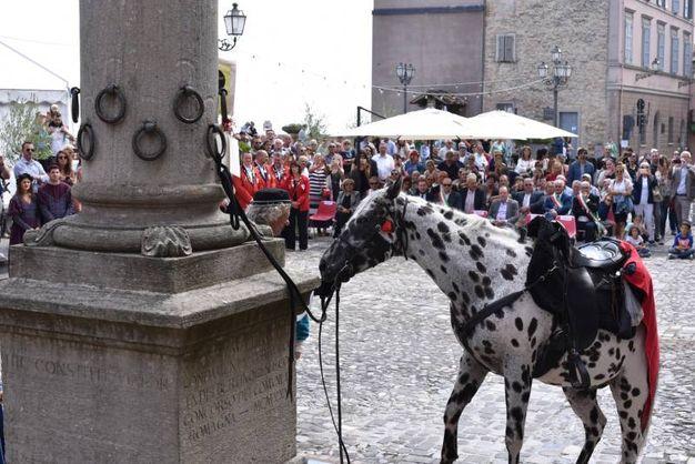 La tradizione rievocata ebbe inizio nel 1200, anno in cui le famiglie nobili di Bertinoro fecero innalzare una colonna nella piazza centrale del borgo, incastonandovi, ciascuna, un anello (foto Frasca)