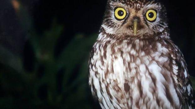 Alla scoperta degli animali notturni che popolano la Sentina