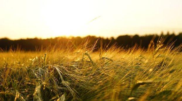 Foto Pixabay: Agricoltura biologica