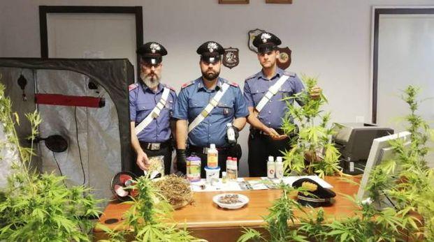 I carabinieri con la piantagione sequestrata