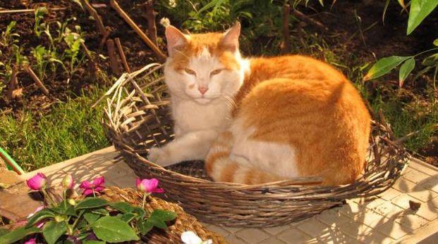 Gatto in giardino (foto repertorio)