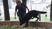 Controlli anche con i cani (FotoSchicchi)