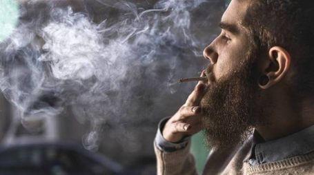Genitori e conoscenti stavano fumando marijuana