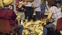 La tradizionale 'spannocchiatura' del granoturco