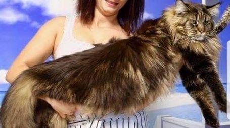 Barivel, il gatto più lungo del mondo (Foto Facebook)