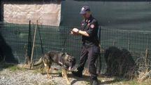 Un momento del blitz dei carabinieri