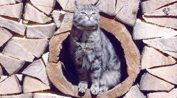 """Ascoli, gli animalisti: """"I gatti randagi vanno sterilizzati"""" (foto di repertorio)"""