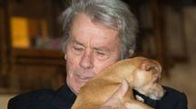 Alain Delon con uno dei suoi amatissimi cani (Lapresse)
