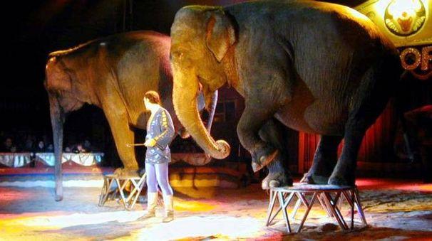 Elefanti del circo in una foto Newpress