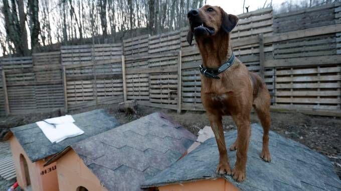Un cane in canile in una foto Reuters