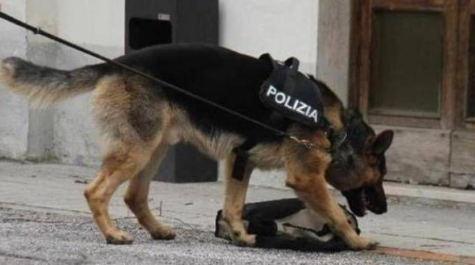 Risultati immagini per pando cane