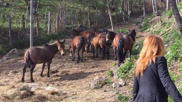 I cavalli della Valle dell'Aveto
