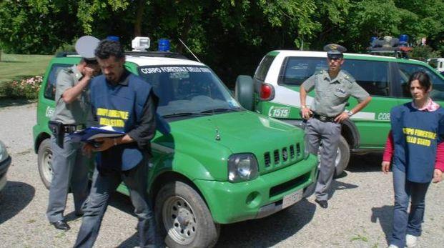 Le indagini del Corpo forestale dello Stato