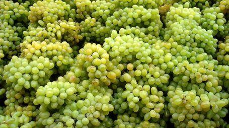 Feste del vino e dell'uva protagoniste a settembre