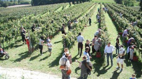 La raccolta dell'uva è sempre una festa