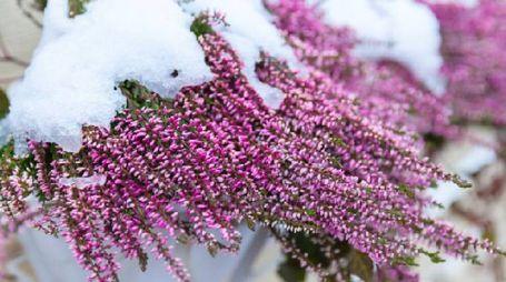 Una pratica mini guida per proteggere le tue piante dal freddo